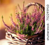 Heather Plant In Basket