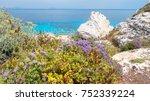 mediterranean scrub flora right ... | Shutterstock . vector #752339224