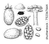 baobab superfood drawing set.... | Shutterstock . vector #752367664