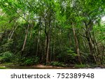 the beautiful nature of lush... | Shutterstock . vector #752389948