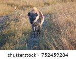 hyena in nature | Shutterstock . vector #752459284
