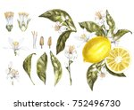 set branch of watercolor lemon... | Shutterstock . vector #752496730