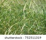 perennial plants. grasess in...   Shutterstock . vector #752511319