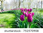 Purple Tulip Garden
