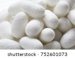 white silkworm cocoons shell....