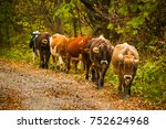 cows on a rural road with a... | Shutterstock . vector #752624968
