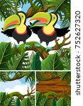 toucans in nature theme