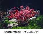 planted tropical aquarium with... | Shutterstock . vector #752631844