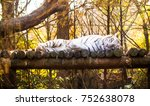 white tiger resting on the tree  | Shutterstock . vector #752638078
