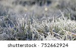 Grass In The Frost  Morning...