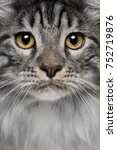 close up of maine coon cat  7... | Shutterstock . vector #752719876
