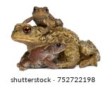mother common toad and her... | Shutterstock . vector #752722198
