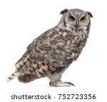 Stock photo great horned owl bubo virginianus subarcticus in front of white background 752723356