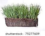 fresh grass | Shutterstock . vector #75277609