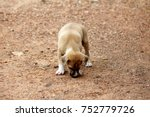puppies are sniffing for food. | Shutterstock . vector #752779726