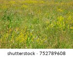 fallow land with flowers | Shutterstock . vector #752789608