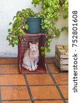 Small photo of Adult male cat at home yard watching at the camera