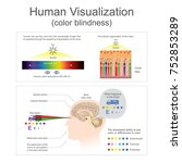 human can see the color from... | Shutterstock .eps vector #752853289