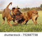 french mastiff dogue de... | Shutterstock . vector #752887738