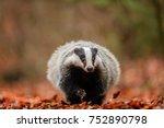 badger running in forest ... | Shutterstock . vector #752890798
