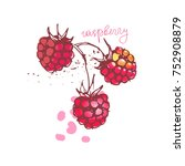 raspberry on a white background ... | Shutterstock .eps vector #752908879