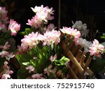 pink color flowers decorated