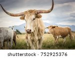 a herd of texas longhorn cattle ... | Shutterstock . vector #752925376