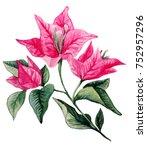 bougainvillea flower bouqet... | Shutterstock . vector #752957296