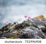 Wild Coastal Flowers Growing O...