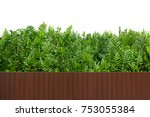 the wart fern of hawaii  tree... | Shutterstock . vector #753055384