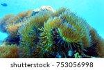 coral reef. diving. underwater... | Shutterstock . vector #753056998