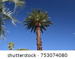 palm tree on a sunny day | Shutterstock . vector #753074080
