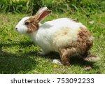 The Rabbit Is Outstanding In...