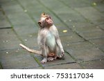 a funny macaque sits on a stone ... | Shutterstock . vector #753117034