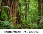 daintree national park ... | Shutterstock . vector #753120643