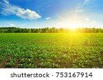 green beet field and blue sky | Shutterstock . vector #753167914
