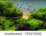 Neon Tetra Fish In Aquarium...