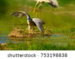heron. black crowned night... | Shutterstock . vector #753198838