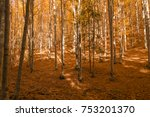 top of the trees in autumn... | Shutterstock . vector #753201370