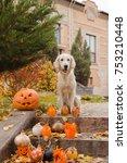 golden retriever  autumn leaves ... | Shutterstock . vector #753210448