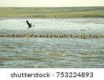 the coast of the polar sea ... | Shutterstock . vector #753224893