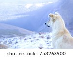 a white dog on top of a snow... | Shutterstock . vector #753268900