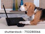 Beagle Dog On The Table...