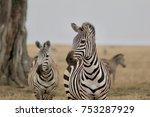zebra  herd of zebras ... | Shutterstock . vector #753287929