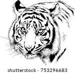 tiger drawn with ink from the...   Shutterstock .eps vector #753296683