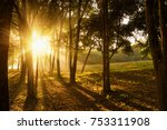 travel in nature at forrest... | Shutterstock . vector #753311908