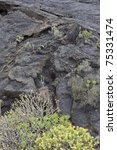Small photo of Black lava field in Lanzarote. Lanzarote a Spanish island, is one of the Canary Islands, in the Atlantic Ocean, appr. 125 km off the coast of Africa.