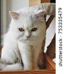 look at my eyes | Shutterstock . vector #753335479