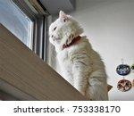 a fluffy cat | Shutterstock . vector #753338170