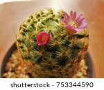 a beautiful plant for decorating | Shutterstock . vector #753344590